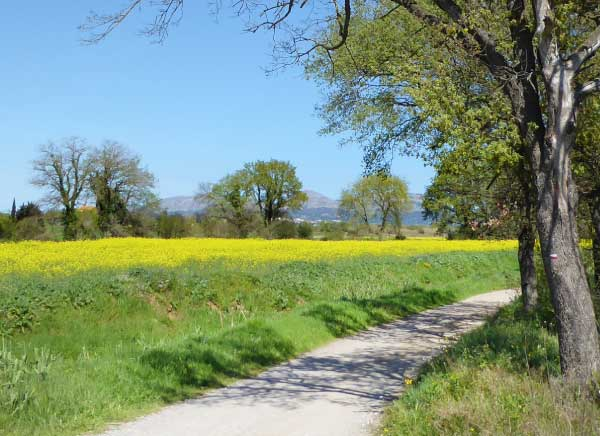 Walking along the fields of the Emporda
