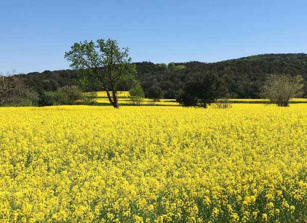 Day rides in the Emporda by mountain bike