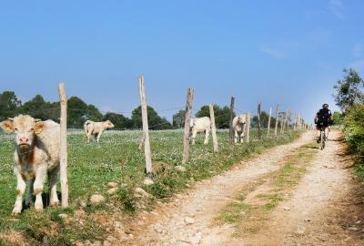 Mountain biking through the fields in the countryside of Girona