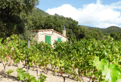 Wineyards of the Emporda