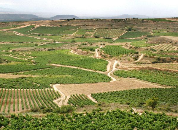 Cycling in La Rioja. Spain